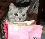 ファーストチョイス猫
